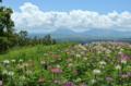 [熊本]ヒゴタイ公園 2011-08-27 12:31:27