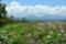 ヒゴタイ公園 2011-08-27 12:31:27