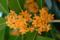 モクセイの花 2011-10-04 14:06:54
