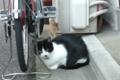 [猫]根津 2011-11-22 16:00:20