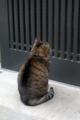 [猫]根津 2012-02-16 11:11:19