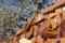 湯島天神 2012-03-13 15:13:57
