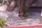 ペットボトルの猫よけ 2012-03-20