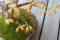 紅葉の盆栽 2012-03-27
