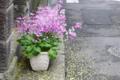 [東京][街角]根津 2010-04-07 10:30:05