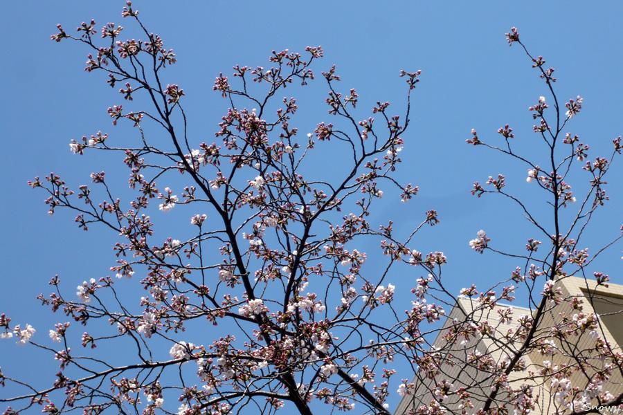 藍染大通り 2012-04-04