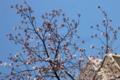 [東京][街角][桜]藍染大通り 2012-04-04