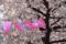 神田明神 2012-04-08