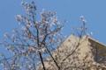 [東京][街角][桜]藍染大通り 2012-04-12
