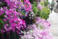[東京][街角]根津 2012-04-13