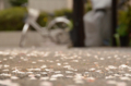 [東京][街角][桜]蛇道にて 2012-04-17