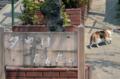 [東京][街角]谷中銀座 2012-04-17