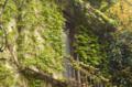 [東京][街角]2012-04-23 雨の日の蔦の窓