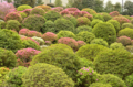[東京][神社]2012-04-25 根津神社