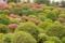2012-04-25 根津神社