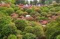 [東京][神社][祭]根津神社 2012-04-29