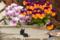 谷中 MEOW MEOW 2012-04-11