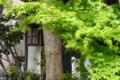 [東京][街角]根津の甚八&甚八おうちカフェ(築100年古民家カフェ) 2012-04-13