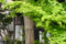 根津の甚八&甚八おうちカフェ(築100年古民家カフェ) 2012-04-13
