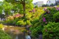 [東京][神社]根津神社 2012-05-07