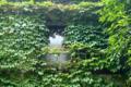 [東京][街角]蔦の窓 2012-05-16