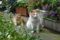 [東京][街角][猫]根津 2012-05-18