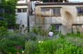 [東京][街角]根津の猫野原 2011-05-25