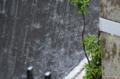 [雨]雨 2012-05-28