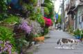 [東京][街角][路地]根津の路地 2012-05-04