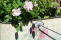 [花]根津 2012-04-04