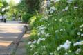 [東京]春紫苑@不忍池 2012-05-07
