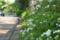 春紫苑@不忍池 2012-05-07