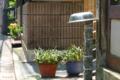 [東京][街角]根津 2012-06-04