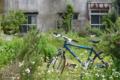 [東京][街角]根津 2012-05-16