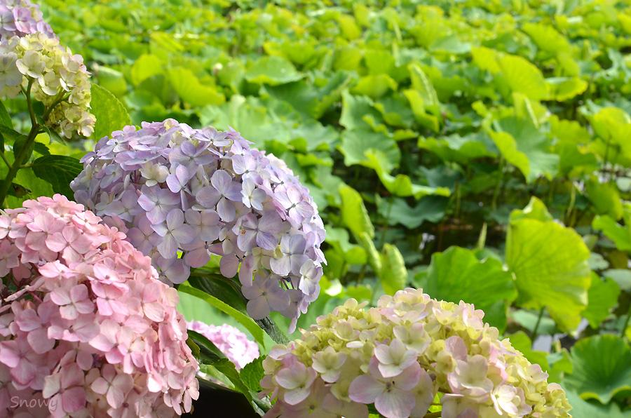 不忍池 2012-06-15