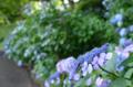 [東京][公園]江戸城二の丸庭園 2012-06-27