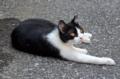 [猫]根津 2012-06-26
