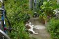 [猫]根津 2012-07-03