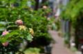 [東京][街角]藍染大通り 2012-06-26