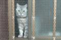 [猫]谷中 2012-07-14 18:29:26