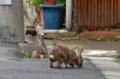 [東京][街角]ウサギ@根津 2012-07-21 14:33:10