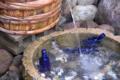 [熊本]池山水源 2010-07-31
