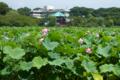 [東京]不忍池 2012-08-09