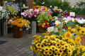 [東京][街角]千駄木の花屋さん 2012-08-13