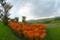 ヒゴタイ公園 2006-09-02 15:50:14