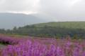 [熊本]ヒゴタイ公園 2006-09-02