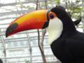 [鳥]掛川花鳥園 2012-09-07 15:38:21