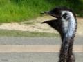 [鳥]掛川花鳥園 2012-09-07 15:52:56