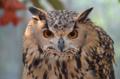 [鳥]掛川花鳥園 2012-09-07