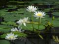 [花]掛川花鳥園 2012-09-07
